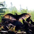 A Wake of Vultures by Robert  Mackert