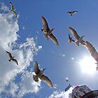 Brighton Seagulls by Colin J Williams Photography