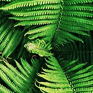 Fronds by geogirl