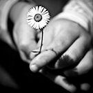 easter daisy ........................... by deborah brandon