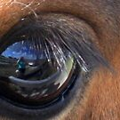 What Am I Doing In This Horse's Eye? by AuntDot