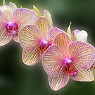 A Stem of Orchids by cclaude