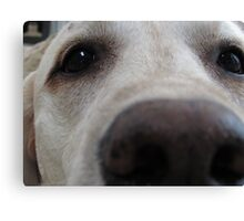 Nosy Dogs Canvas Print