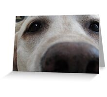 Nosy Dogs Greeting Card