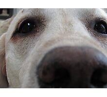 Nosy Dogs Photographic Print