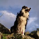 Every dog must have his day. by Michael Haslam