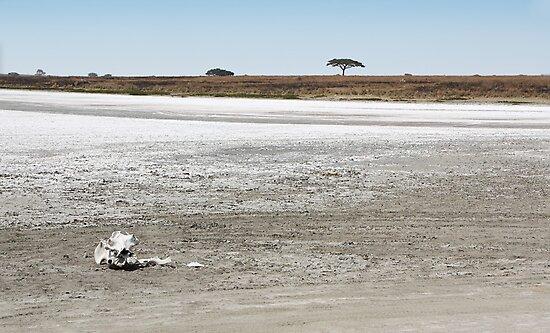 Death, & Dead Lake, Tanzania  by Carole-Anne