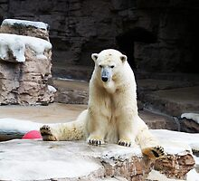 Polar Bear I by Unconventional
