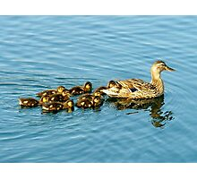 Mama Duck with her Babies Photographic Print