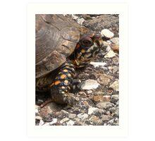 Three-Toed Ornate Box Turtle I Art Print