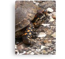 Three-Toed Ornate Box Turtle I Canvas Print