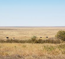 African Elephants in the Landscape, Tanzania  by Carole-Anne