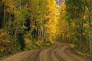 Kebler Pass Aspens by Wojciech Dabrowski