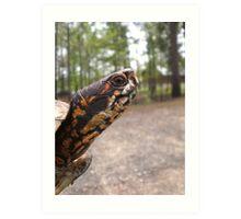 Three-Toed Ornate Box Turtle II Art Print