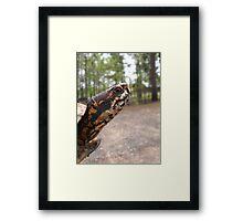 Three-Toed Ornate Box Turtle II Framed Print