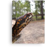 Three-Toed Ornate Box Turtle II Canvas Print