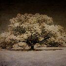 The Magic Tree by Marzena Grabczynska Lorenc