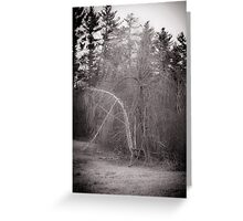 Pushing out the Birch Greeting Card