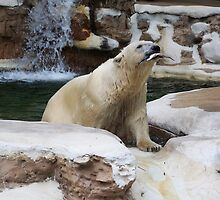Polar Bear III- So Proud! by Unconventional