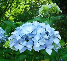 Floral art Blue Hydrangea Flowers Garden Baslee Troutman by BasleeArtPrints