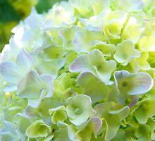 Paster White Yellow Green Hydrangea Flowers art by BasleeArtPrints