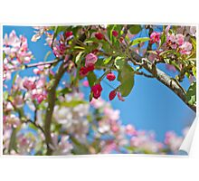 Meet Me Under The Cherry Tree Arch Poster
