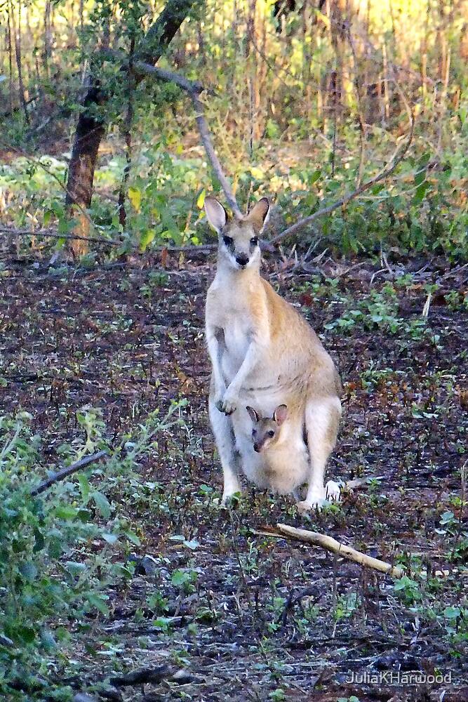 Kangaroo & baby Joey by Julia Harwood