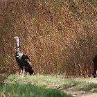 Two Turkey by outlawboy2