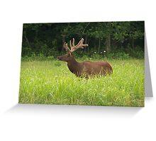 Bull Elk in Velvet Greeting Card