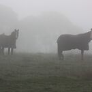 Horses in the mist by lutontown