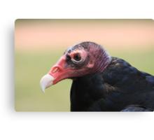 "Turkey Vulture - ""Snoopy"" Canvas Print"