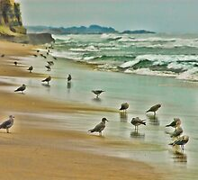 Birds, Pescadero, CA by vincefoto