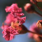 Crepe Myrtles Magic by Joy Watson