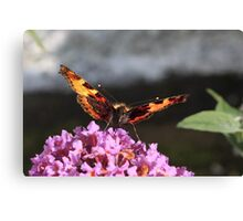 Savouring the nectar Canvas Print