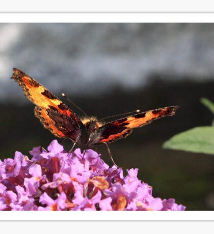 Savouring the nectar Sticker