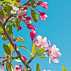 Good Morning Sunshine by Jayne Le Mee