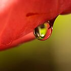 a drop of red and green by lensbaby