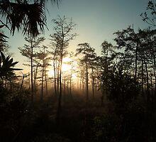 foggy swamp by kathy s gillentine