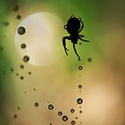 Spider Sillouette by Amy Dee