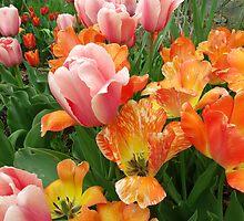 Brookside Gardens by Daniel B McNeill