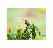 Mellow Yellow - sunbird Art Print