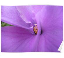 Hello Hibiscus Poster