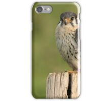 American Kestrel - II iPhone Case/Skin