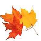 Maple Leaves by snehit