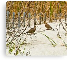 DOVES IN THE DUNE Canvas Print