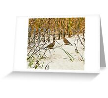 DOVES IN THE DUNE Greeting Card