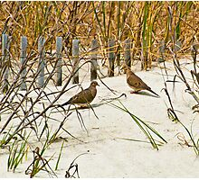 DOVES IN THE DUNE Photographic Print