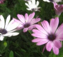 Purple and White Daisies 1 Painterly by Christopher Johnson
