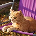 Ginger Tom on Purple Garden Chair  by jojobob