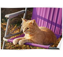 Ginger Tom on Purple Garden Chair  Poster